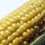 コーンスターチは遺伝子組換え食品!?片栗粉の代用にも…