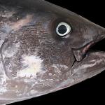 養殖魚について。資源保護の観点と過密飼育や餌の問題
